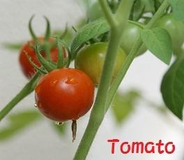 Tomato-2.jpg