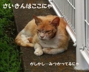aniki0610-1.jpg