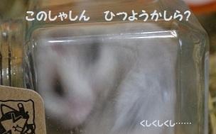 goma0316-1.jpg