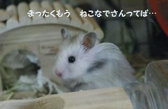 goma0412-1.jpg