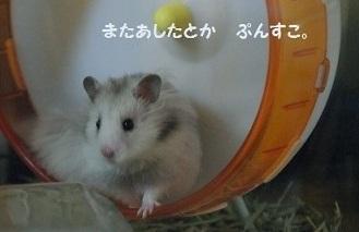 goma0412-6.jpg