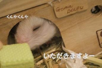 goma0718-7.jpg