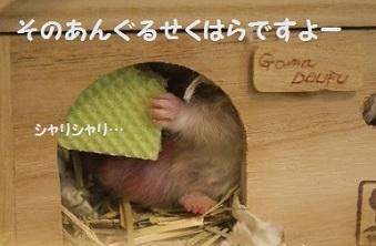 goma0718-9.jpg